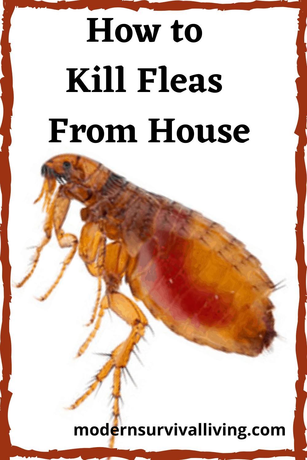 How to Kill Fleas From House