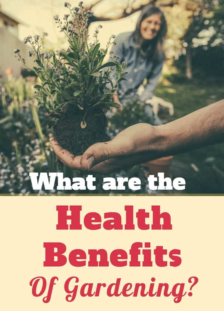What Are the Health Benefits of Gardening
