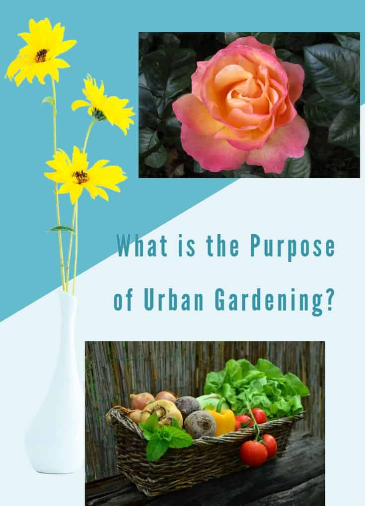 What is the Purpose of Urban Gardening